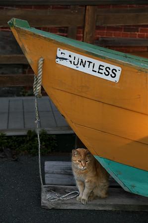 Dauntless Stubby