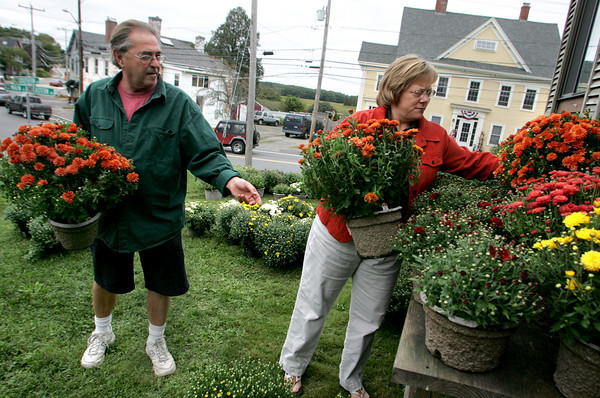 """Essex: Casey Leeds picks out the rust colored mums with the help of Bob Coviello at Joshua's Corner Antiques Thursday afternoon. 2000 mums were delivered to Joshua's Corner Antiques for business owners and residents to come pick up so the plants can be displayed around downtown Essex as part of the Essex Merchants Group's """"Mums the Word"""" campaign to beautify downtown.  Mary Muckenhoupt/Gloucester Daily Times"""