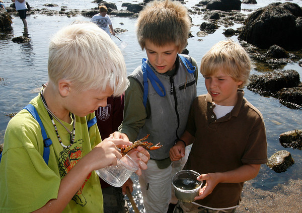 Gloucester: Jack Davis identifies the sex of a baby lobster as William Dyer and Miles Bryan look on while exploring the tide pools below Stacy Boulevard Monday afternoon. The class was part of the Ocean Explorers Program, which is sponsored by the Gloucester Education Foundation and other grants. Photo by Kate Glass/Gloucester Daily Times Monday, September 28, 2009