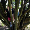 Manchester: Cole Riehl, 2, climbs in a tree at Masconomo Park with his brother, Wyatt, 4, yesterday afternoon. The two said they were not afraid of heights. Photo by Kate Glass/Gloucester Daily Times Monday, September 14, 2009