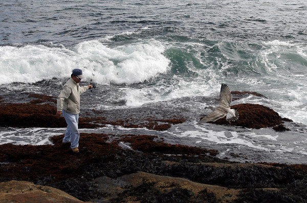Gloucester: Alex Suh of North Andover fishes on the rocks along Shore Road Wednesday afternoon. Photo by Kate Glass/Gloucester Daily Times Wednesday, September 16, 2009