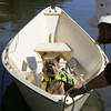 Essex: Laurie Fullerton pulls in the dory carrying Tia Schliakjer's dog Bear  during Salty Dog Day at the Essex Shipbuilding Museum Saturday afternoon. Salty Dog Day offered the community a chance to explore how dogs have been and continue to be important friends on land and at sea. Bear proved to be a true salty dog. Mary muckenhoupt/Gloucester Daily Times