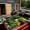 "Essex: Maria Burnham and her husband Charles, right, load up the back of their truck with mums with the help of Robbie Coviello at Joshua's Corner Antiques Thursday afternoon. 2000 mums were delivered to Joshua's Corner Antiques for business owners and residents to come pick up so the plants can be displayed around downtown Essex as part of the Essex Merchants Group's ""Mums the Word"" campaign to beautify downtown. The Burnham's were picking up mums for the Essex Ship Building Museum and belived they had 37 plants in their truck and were coming back for more. Mary Muckenhoupt/Gloucester Daily Times"