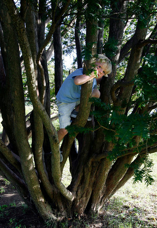 Manchester: Wyatt Riehl, 4, peeks out while climbing a tree at Masconomo Park on Monday. Photo by Kate Glass/Gloucester Daily Times Monday, September 14, 2009