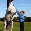 Essex: Heather Meyer and Legacy of Herrmann's Royal Lipizzan Stallions of Austria practice their tricks at Cogswell's Grant in Essex Wednesday evening. The two will be performing with the rest of the crew, including Head Trainer Gabriella Herrmann, tonight at 5, tomorrow and 2, and Sunday at 2. Photo by Kate Glass/Gloucester Daily Times Wednesday, September 9, 2009