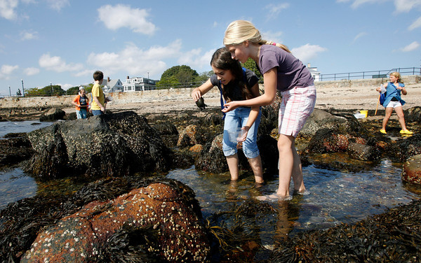 Gloucester: Brianna Fernandes and Genevieve Healey, both fifth grade students at East Gloucester Elementary School, discover a cluster of mussels attached to a rock while exploring the tide pools below Stacy Boulevard Monday afternoon. The class was learning about how animals adapt to their environment while taking part in the Ocean Explorers Program, which is sponsored by the Gloucester Education Foundation and other grants. Photo by Kate Glass/Gloucester Daily Times Monday, September 28, 2009