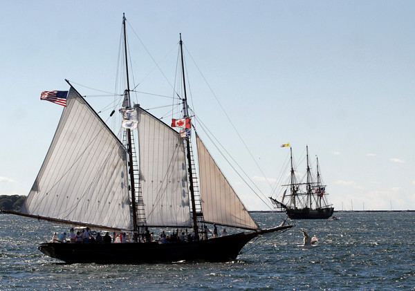 Gloucester: The Thomas E. Lannon, front, leads the 26th Annual Schooner Festival Parade of Sail yesterday morning as Friendship heads into Gloucester Harbor. Photo by Kate Glass/Gloucester Daily Times