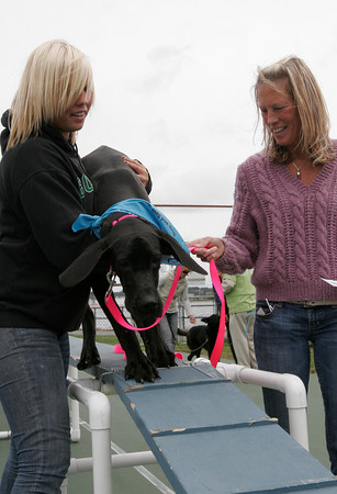 Gloucester: Mariah Place of Gloucester picks up her 7-month-old Great Dane, Zelda, as her mom, Diane Place, holds the leash during Cape Ann Animal Aid Dog Day at Stage Fort Park yesterday. Zelda was not sure what to make of the height of the obstacle on the agility course. Photo by Kate Glass/Gloucester Daily Times