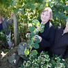 "Rockport: Rockport Garden Club members Gil McCarthy, Nan Blue, and Laura Hallowell have formed an ""Invasive Species Kill Team"" in an effort to remove invasive plants, especially Japanese Knotweed, from Rockport. Photo by Kate Glass/Gloucester Daily Times"