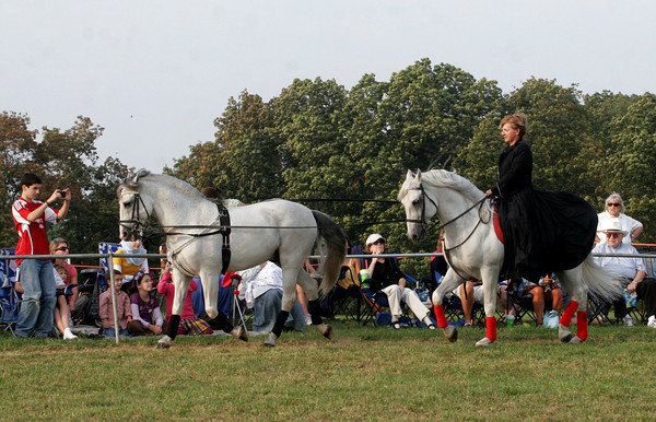 Essex: Gabriella Herrmann guides Desert Storm and Legacy around the ring in tandem at Cogswell's Grant in Essex. Herrmann's Royal Lipizzan Stallions of Austria did three performances at the site over the weekend, drawing a large audience. Photo by Kate Glass/Gloucester Daily Times