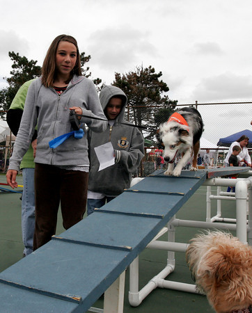 Gloucester: Rachel Fitzgerald and Dakotah Killar guide their dog Juno down an obstacle on the agility course during Cape Ann Animal Aid Dog Day at Stage Fort Park yesterday. All proceeds from the event benefit Cape Ann Animal Aid. Photo by Kate Glass/Gloucester Daily Times