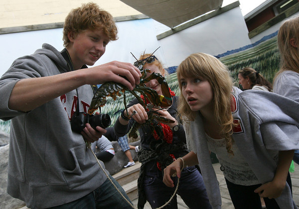 Gloucester: Julius Winter, left, holds up a lobster as Ieva Zuklyte gets a close-up view of its claws at the Gloucester Maritime Heritage Center yesterday afternoon. The students, who are among 15 students visiting Gloucester from Switzerland as part of an exchange program, arrived on Cape Ann Sunday night and will be staying until October 1st. Photo by Kate Glass/Gloucester Daily Times
