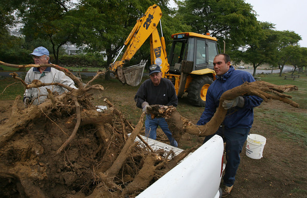 Gloucester: Ed Parks, Bunky McKay, and Michael Tarantino remove the roots of a dead elm tree at Stage Fort Park yesterday. The crew cut down four dead trees last week and are removing the stumps this week as they prepare the park for the offseason. Photo by Kate Glass/Gloucester Daily Times