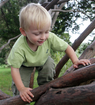 Henry Barone, 2, of Nahant, climbs up a tree at Masconomo Park afterschool on Tuesday afternoon. David Le/Gloucester Daily Times