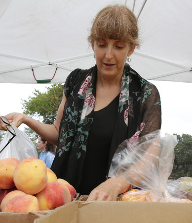 Marla Brin, from Washington DC, picks through some fresh fruits and vegetables at Farmer Dave's stand at the Cape Ann Farmer's Market on Thursday afternoon. The Farmer's Market is part of the Get Fit Gloucester effort. David Le/Gloucester Daily Times