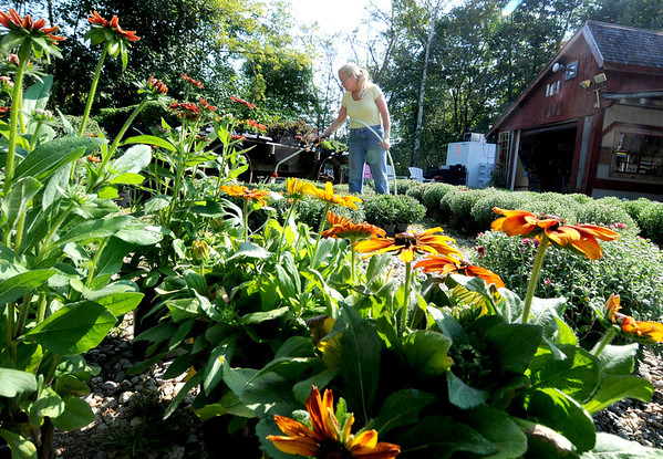 Jim Vaiknoras/Gloucester Daily Times: Kelly Atkinson water plants that are for sale at the Utopia Farm stand in Rockport Wednesday.