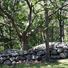 Allegra Boverman/Gloucester Daily Times. These two rock mounds are at Haskins Park on Summit Avenue in Rockport next to a dramatic tree.