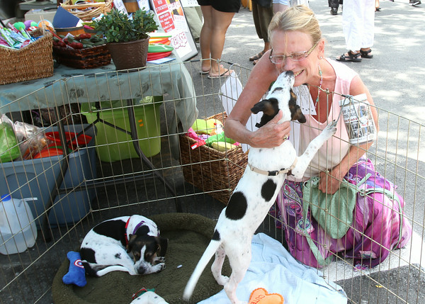 AMY SWEENEY/Staff photo. Lisa Carlson, from Gloucester, greets a pup that is up for adoption through the Cape Ann Animal Aid at the Sidewalk Bazaar.