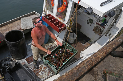 MIKE SPRINGER/Staff photo Lobsterman Jon Mondello of the Pisces lands his catch Friday at Captain Joe & Sons in Gloucester. 8/17/2018