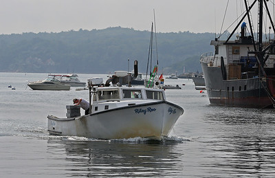 MIKE SPRINGER/Staff photo The lobster boat the Riley Roo returns to Gloucester Harbor with its catch Friday afternoon. 8/17/2018