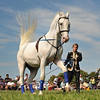 Essex: A rider works with one of the Royal Lipizzan horse' as they performs some maneuvers, for a crowd of spectators Saturday afternoon at Cogswell's Grant.   Desi Smith/Gloucester Daily Times. September 9, 2012