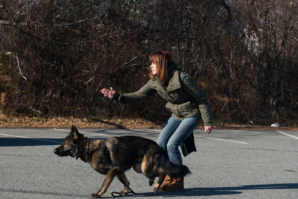 SAM GORESH/Staff photo. Barbara Hogan throws a ball for her East German Shepherd Mike to retrieve. Hogan trains Mike for IPO competitions which is a German sport where dogs compete in events that include protection obedience and tracking. 12/13/16