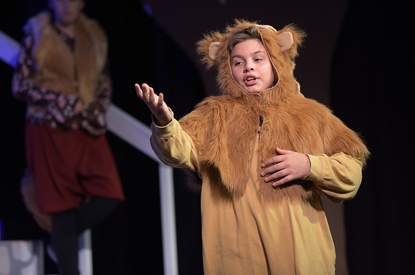 TIM JEAN/Staff photo  Oli Dunton as Aslan performs on stage during a rehearsal of Rockport Middle School's performance of C.S. Lewis' The Lion, the Witch and the Wardrobe.  12/11/18