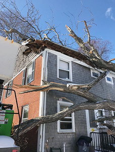 Tree Falls on House