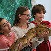 MIKE SPRINGER/Staff photo<br /> Fifth-graders, from left, Ava Paone, Josie West and Kayden Lewis hold a boa constrictor during an educational visit Thursday from the Beverly-based Rainforest Reptile Shows at West Parish Elementary School in Gloucester.<br /> 02/01/2018