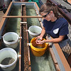 MIKE SPRINGER/Staff photo<br /> Sarah Valencik of the Massachusetts Oyster Project examines a handful of oyster larvae, or spat, after she and MOP intern Lauren Puishys installed about 50,000 of the tiny sea creatures Friday in an upweller tank on the pier at Maritime Gloucester. An upweller is a device that nurtures the oysters, providing them with a steady flow of nutrient-rich sea water while protecting them from predators. After they grow through the rest of the summer and into the early fall, the oysters will be ready for release into the wild, where they help support a healthy ecosystem for other marine life. In 2017 the group released a similar batch of oysters in Gloucester, Essex and Ipswich.  This year the group has expanded the project, establishing new upwellers in Marblehead and Hyannis.<br /> 7/27/2018