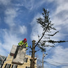 MIKE SPRINGER/Staff photo<br /> Chuck Osmond of the Rockport Department of Public Works prepares to cut off the last branch of the town Christmas tree Wednesday afternoon at Dock Square. The once-magestic tree was chopped into pieces and unceremoniously hauled away to the town dump.<br /> 01/24/2018