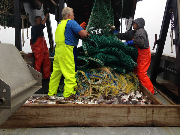 SEAN HORGAN/Staff photo<br /> From left, Capt. Kevin North, Paul Fitzgibbons and Frank Mirarchi haul the net  aboard the Miss Emily after the first trawl.