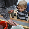 Baby Oysters Arrive at Maritime Gloucester Nursery