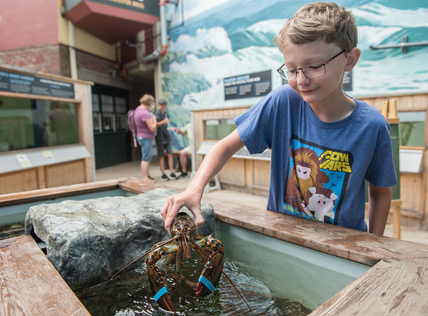 AMANDA SABGA/Staff photo<br /> <br /> Josh Scott, 8, of New Brunswick, holds a lobster during a Creature of the Week event at Maritime Gloucester.<br /> <br /> 7/18/19