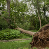 AMANDA SABGA/Staff photo<br /> <br /> Trees lay uprooted long Marchant Street in Rockport after a microburst yesterday evening knocked them down.<br /> <br /> 7/18/19