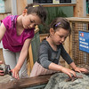AMANDA SABGA/Staff photo<br /> <br /> Sisters Noa, 6 and Rose, 4, Lewis explore sea creatures during a Creature of the Week event at Maritime Gloucester.<br /> <br /> 7/18/19