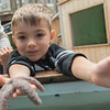 AMANDA SABGA/Staff photo<br /> <br /> Damian Dejanovic, 5, of Toronto, shows off a starfish during a Creature of the Week event at Maritime Gloucester.<br /> <br /> 7/18/19