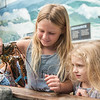 AMANDA SABGA/Staff photo<br /> <br /> Makenna Jordan, 8, and Layla Fabacher, 5, of Florida investigate a lobster during a Creature of the Week event at Maritime Gloucester.<br /> <br /> 7/18/19