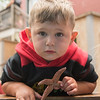AMANDA SABGA/Staff photo<br /> <br /> Jack Mazzeo, 2, of Gloucester holds a starfish during a Creature of the Week event at Maritime Gloucester.<br /> <br /> 7/18/19