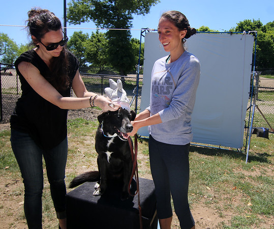 Photo by Allegra Boverman. Gloucester: During the 90th anniversary of Old Mother Hubbard Baking Company a company that started in Gloucester, held at the dog park at Stage Fort Park on Saturday. In August there will be an exhibit at the Gloucester Maritime Museum of memorabilia from the last 90 years of the company's existence. Liza Rosenfield, right, of Rockport, was having photos of her dog Rory, 10, taken at the event. She is being helped by photographer assistant Maria Pantazopoulos of Lowell, whose sister Georgia Patazopoulos of Lowell was taking the photos.