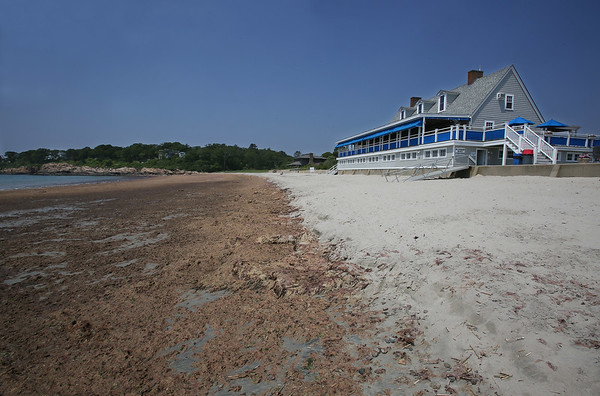 Seaweed on Gray Beach