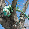 Desi Smith /Gloucester Daily Times.  A forgotten stuffed Iguana sits on a limb of a tree wrapped with christmas lights on Pine St in Manchester Saturday morning. <br />   March 1,2014.