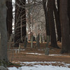 Desi Smith /Gloucester Daily Times.  Tree tower over tombstones at the Old Burial Grounds in Manchester Saturday morning. <br />   March 1,2014.