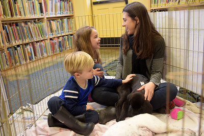 TIM JEAN/Staff photo Christina Yukins, of Manchester, and her children Calvin, 3, left, and Claire, 6, pat 3 month puppies during a meet and greet with Cape Ann Animal Aid at the Manchester By-The-Sea Public Library. The shelter has several puppies available for adoption, and had volunteers on hand to explain the process. 3/25/17
