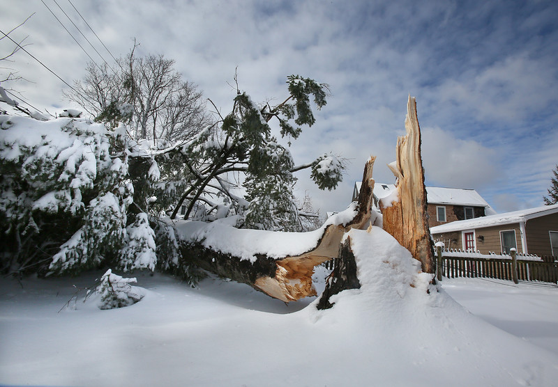 MIKE SPRINGER/Staff photo<br /> A large evergreen tree on Norwood Avenue in Rockport lies boken Wednesday after it snapped at the base of its trunk during Tuesday's storm.<br /> 3/14/2018
