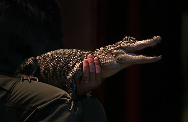 Reptile Presentation