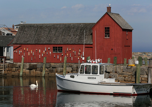 MIKE SPRINGER/Staff photo<br /> A swan swims past the famous Motif No. 1 fishing shack in Rockport Harbor.<br /> 1/20/2018