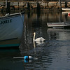 MIKE SPRINGER/Staff photo<br /> A swan glides gracefully across Rockport Harbor.