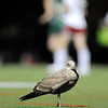 181107_GT_JPR_FIELDHOCKEY_012.JPG