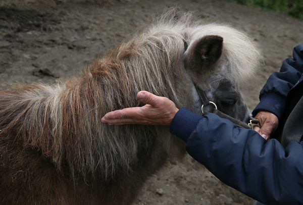 Horses Illegally Clipped